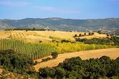 Cultivated Fields And Orchards, Greece