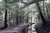 Walk Through Woods