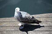 seagull on quay