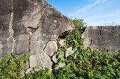 Cracked Wall Of A Bunker Overgrown With Plants