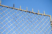 Old fence net
