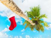 Christmas Sock On Palm Tree At Exotic Tropical Beach Against Blue Sky