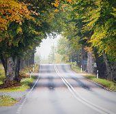 Oak Tree Tunnel Road During Autumn
