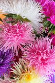 fresh aster flowers bouquet close up background