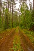 Forest Road On A Rainy Day