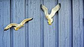 stock photo of mew  - Wooden wall of wooden planks with knots. Painted blue boards. Attached to the wall two white gulls.