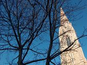 Branches of trees and white tower of a church
