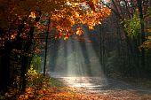 Misty autumn landscape
