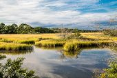 picture of october  - Brilliant Green Wetland Marsh Grass Growing Under Blue October Skies - JPG
