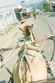 picture of rickshaw  - Romantic view of asian street life from vintage horse powered rickshaw - JPG