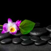 foto of calla lily  - spa background of purple orchid dendrobium and green leaf Calla lily with drops on black zen stones closeup - JPG