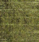 image of algae  - Nori sheet of edible seaweed species of the red algae genus Porphyra as a background texture - JPG