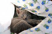 Portrait Of Cute Domestic Kitten