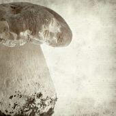 stock photo of boletus edulis  - textured old paper background with porcino mushroom Boletus edulis - JPG