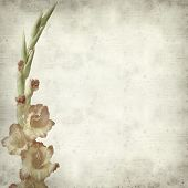 image of gladiolus  - textured old paper background with orange gladiolus - JPG