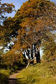 Autumnal Walk poster