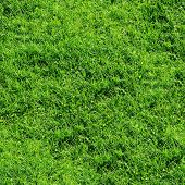 Green grass seamless background. (See more seamless backgrounds in my portfolio).