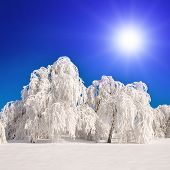 Snowy landscape with white trees.