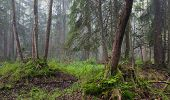 Misty Morning In Alder-carr Stand Of Bialowieza Forest