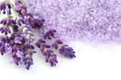 lavender bath salt and some fresh lavender isolated on white