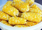 Early corn