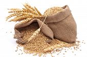 Sacks of wheat grains
