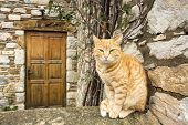 Stray Cats. Turkey Mugla Datca Stray Cats. poster