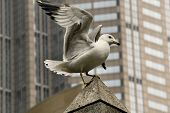 Downtown Seagull