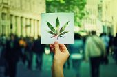 Hand Holding A Paper Sheet With Marijuana Leaf Symbol Over A Crowded Street Background. Cannabis Leg poster