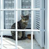 gato tras las rejas de la ventana