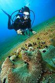 Underwater Photographer and Anemone
