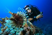 Scuba Diver and Lionfish (Pterois miles)