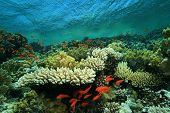 Pristine beautiful coral reef