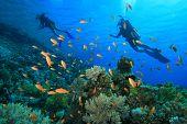 Buceadores explorar un arrecife de coral