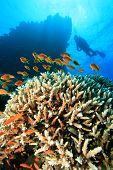 Scuba Diving over a beautiful coral reef