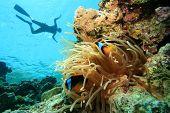 Snorkel con pez payaso
