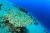 Pollution problem: Dead coral killed by global warming and pollution of the Seas. A portion of earni