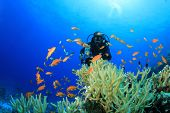 Underwater Scuba Diver and Coral Reef with Tropical Fish in the Red Sea