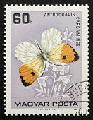 HUNGARY - CIRCA 1959: a stamp printed in Hungary shows illustration of Orange Tip - Anthocharis Card