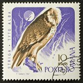ROMANIA - CIRCA 1967: a stamp printed in Romania shows image of a barn owl standing on tree brunch. Romania, circa 1967