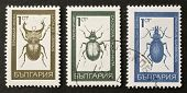 BULGARIA - CIRCA 1968: three stamps printed in Bulgaria show illustrations of insects of Coleoptera