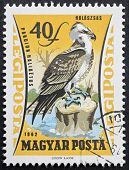 HUNGARY - CIRCA 1962: a stamp printed in Hungary shows illustration of an Osprey standing on a chopped trunk. Hungary, circa 1967