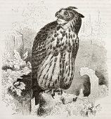 Eurasian Eagle-owl old illustration (Bubo bubo). Created by Kretschmer and Wendt, published on Merve