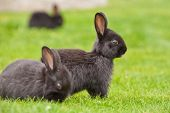 A group of bunny rabbits on grass. Shallow depth of field. Focus on the central rabbit.