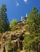 Ponderosa Pine And Modern House