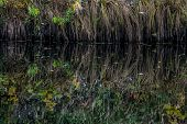 Reflections Of  Grass In The Water Surface Of The River. Background Of Grass And River. Wild Grass O poster