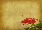 chinese hibisci Rosae-Sinensis Flower with set of abstract painted background