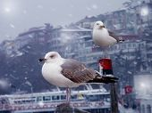 close up shot of seagulls and the ferries