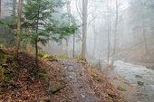 River Bank Trail