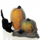 A Halloween cat stalking three oblivious mice crawling over the tattered gray rag covering two orange pumpkins.  On a white background.